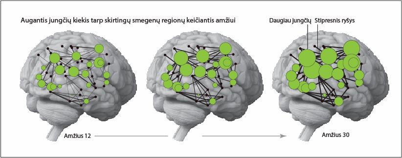 Smegenų regionų kiekis